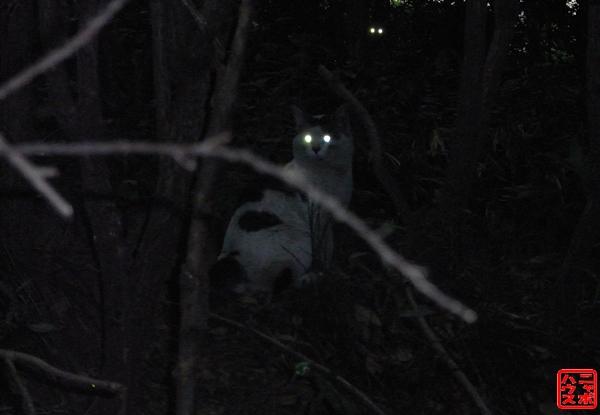 暗闇に光る!ニャンコEye(猫の目)