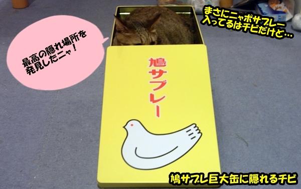 箱入り猫1