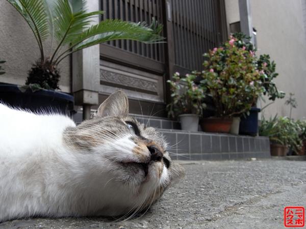 明日は晴れるかニャ? 江の島 野良猫