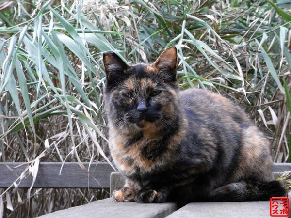 哀愁漂う…カキフライ(サビ猫)