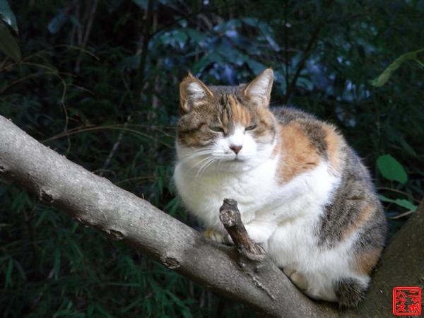 木の上の三毛猫