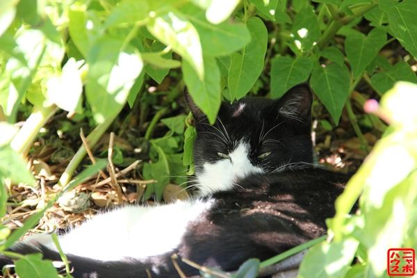 草むらで休憩中