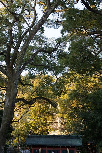 御器所八幡宮鎮守の森