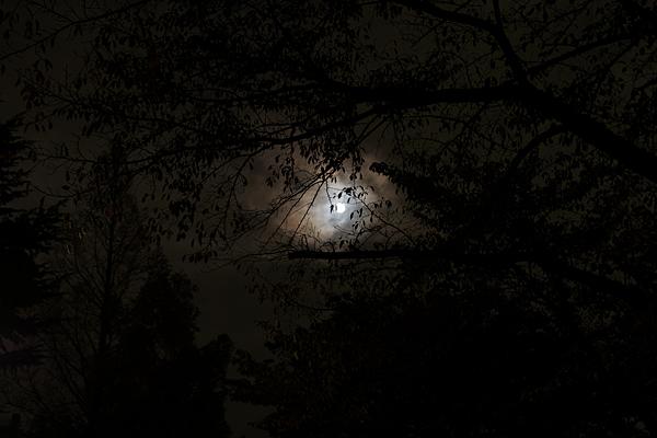 夜の写真-3