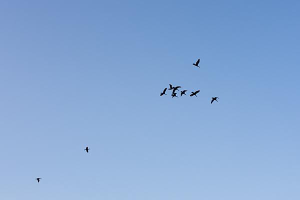 鳥風景-11