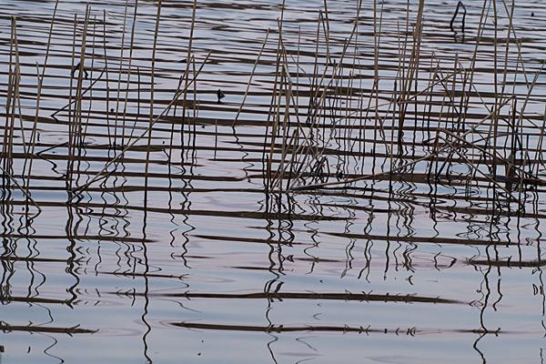 牧野が池-5
