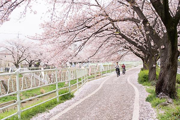 桜10-3