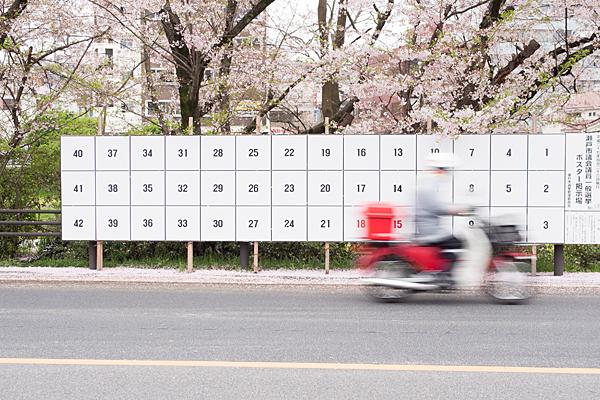 桜7-12