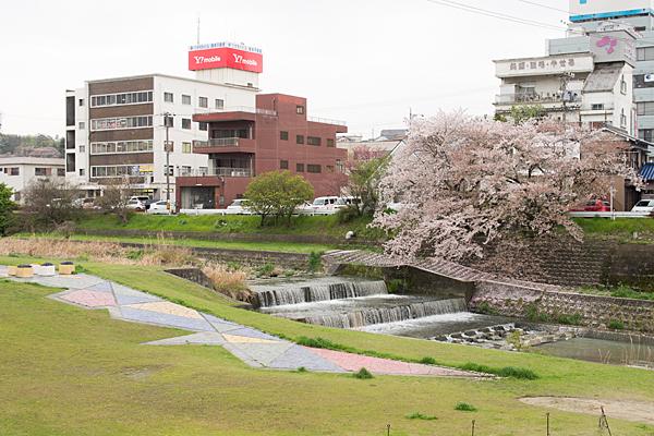 桜7-13