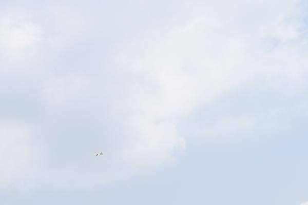鳥風景-1