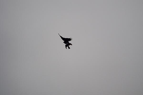 鳥風景-3