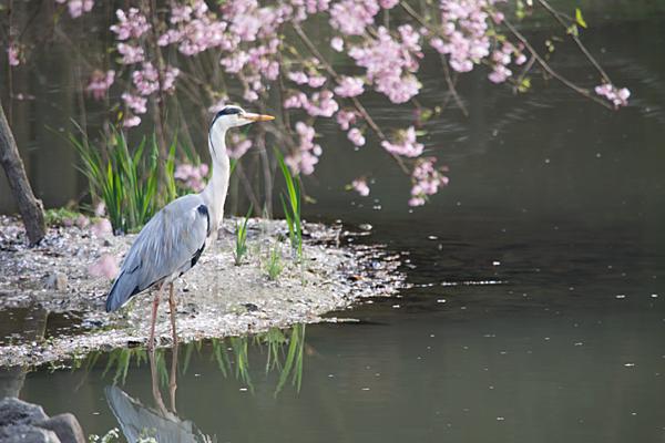 鳥風景-6