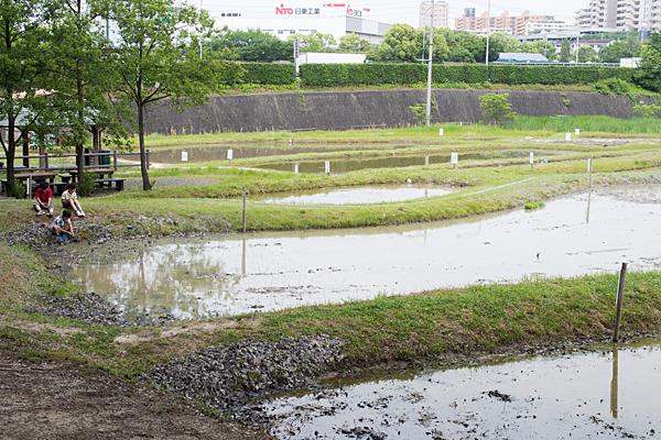 塚ノ杁池12