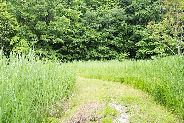 塚ノ杁池2