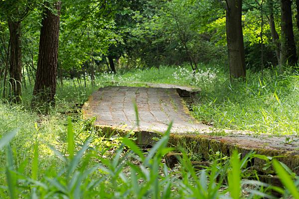 塚ノ杁池5