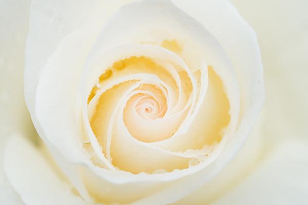 花フェスタ-1