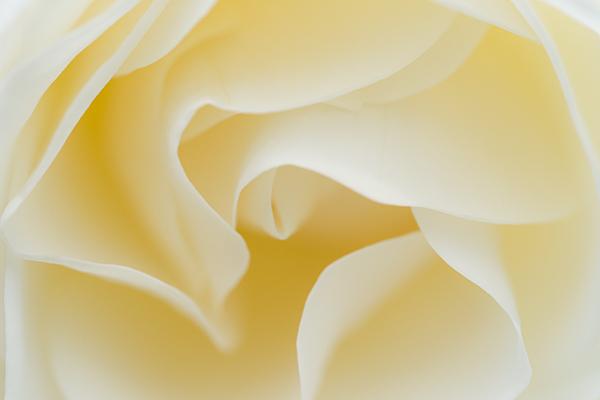 花フェスタ-11