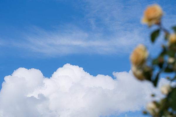 花フェスタ2-4