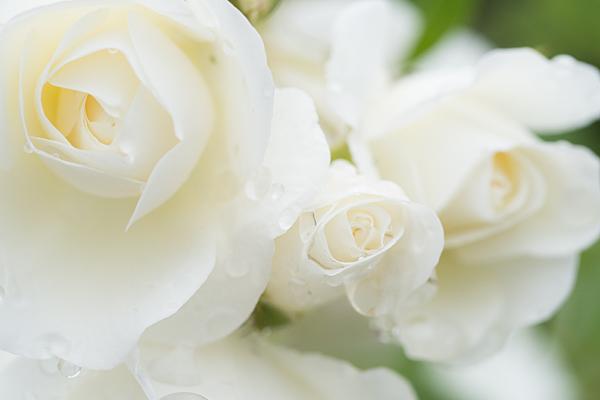 花フェスタ4-11