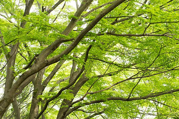 森林公園-1
