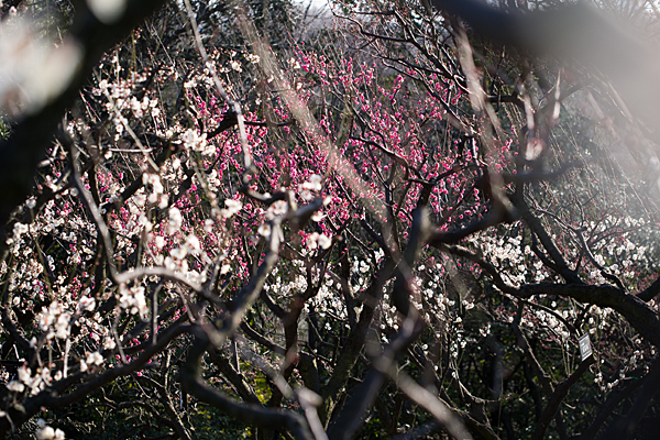 東山植物園-2