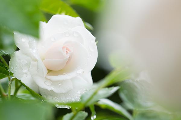 花フェスタ5-2