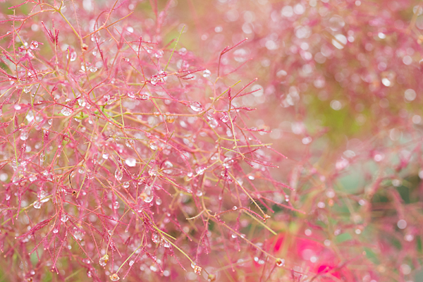 花フェスタ5-5