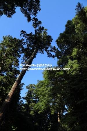 IMG6D_2015_06_06_1558.jpg