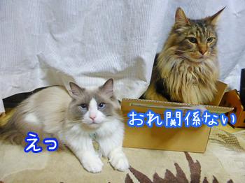 20150514007.jpg