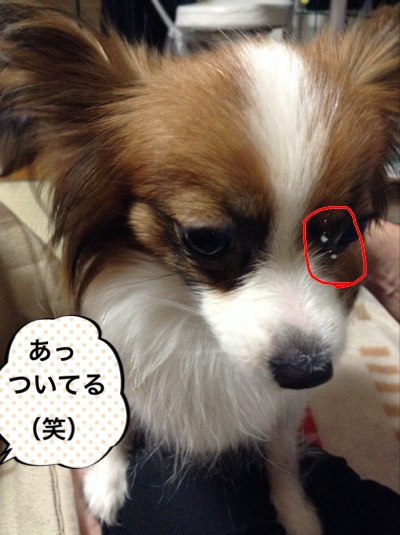 fc2blog_20150422220541736.jpg