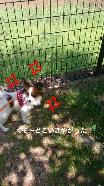 fc2blog_20150426200447a4e.jpg
