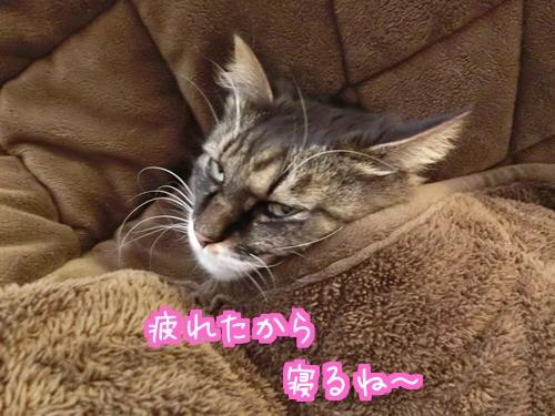 お風呂5.jpg