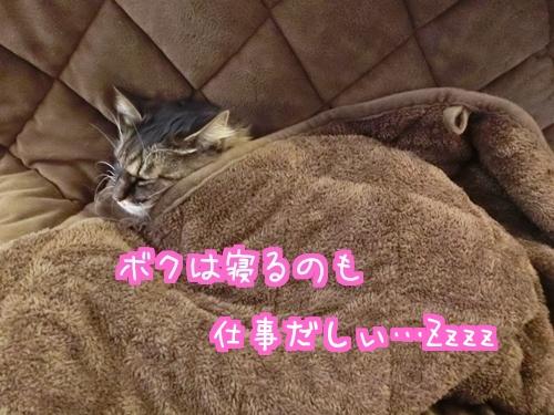 お風呂6.jpg