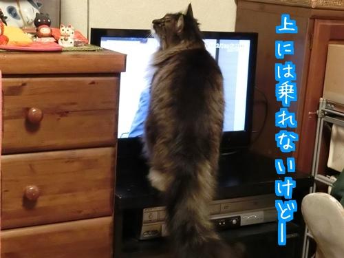 NEWテレビ1.jpg