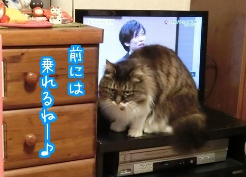 NEWテレビ2.jpg