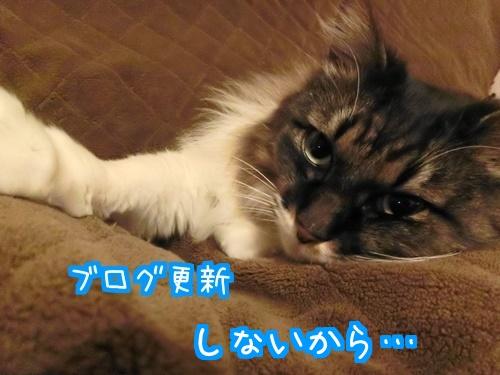 しょんぼりぃ1.jpg