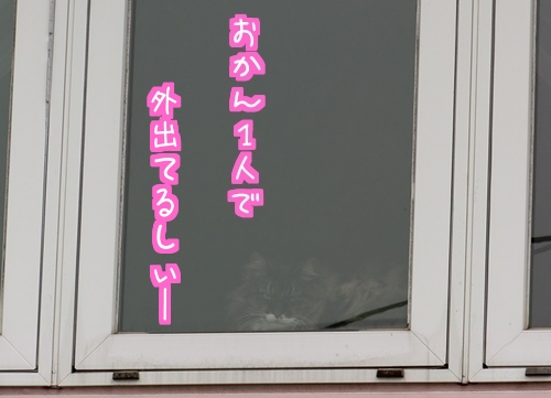 水仙2.jpg