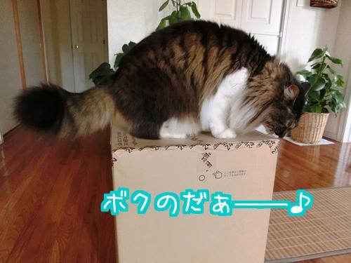 ぷれ2.jpg