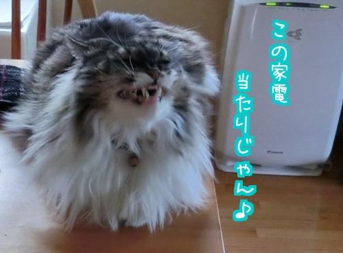 当たりぃ4.jpg