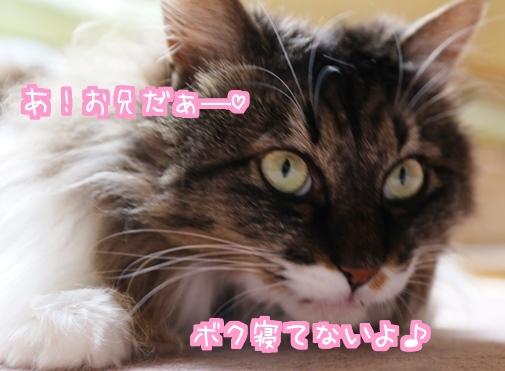 お眠にぃ.jpg