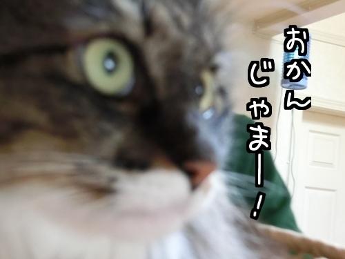 なめなめ~9.jpg