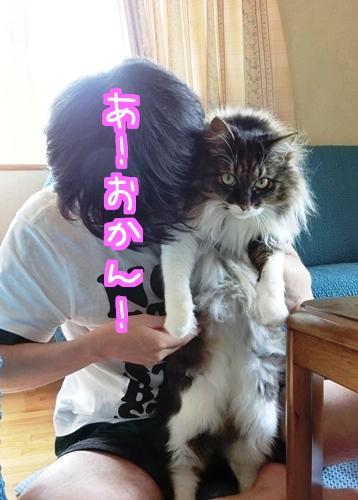猫侍のように2.jpg