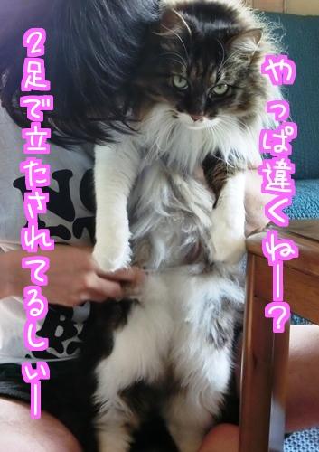 猫侍のように4.jpg