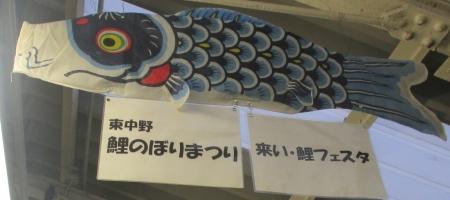 2015東中野鯉フェス真鯉