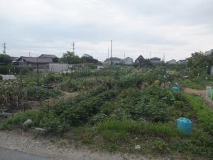 19_私有地の畑