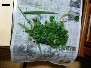 30_雑草を乾かす