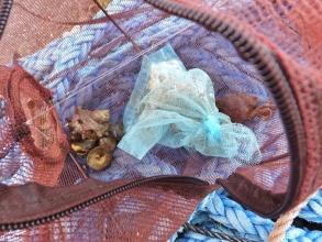 カニ網カゴ・・・1/9に海に入れたので4日も入れっぱなし・・・蟹と巻貝が入っていますが食べるほどでもない感じ~(ToT)2015.01.13夕方