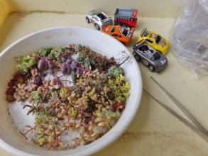おもちゃのミニカーに固まる用土で多肉を植え込みます♪2015.03.15