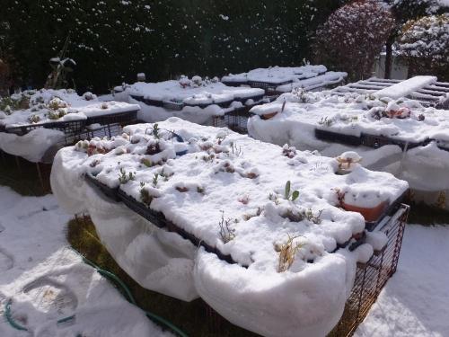 2015年元旦~午後から急に真っ暗になり雹が降りしまいには初雪が積ってしまいました(ToT)多肉がピンチです!2015.01.02