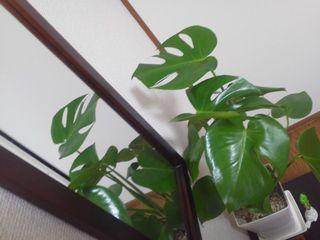 植物20150301